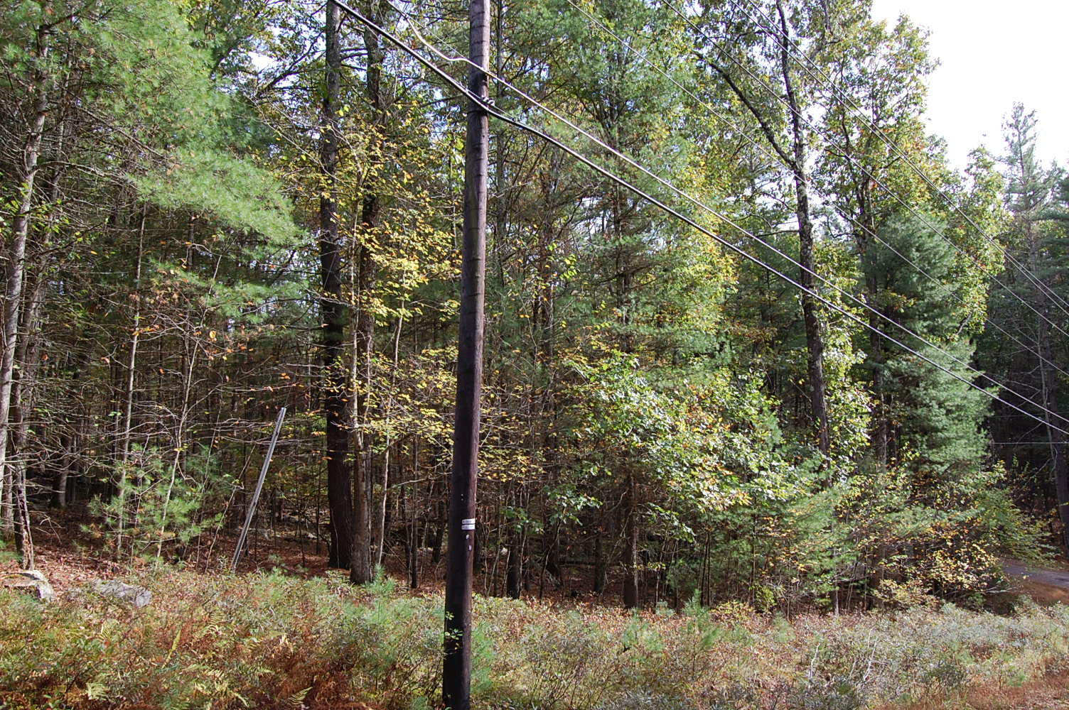 Just Over an Acre Pristine Privacy in Pike County - Image 5