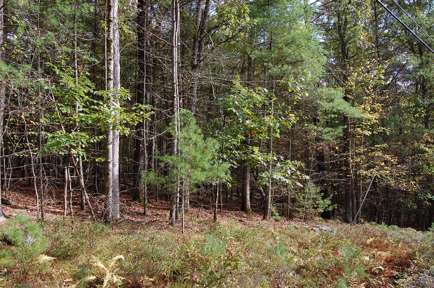 Just Over an Acre Pristine Privacy in Pike County - Image 1