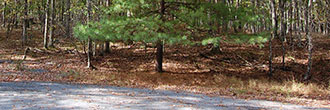Beautiful Wooded Property in the Pocono Mountains