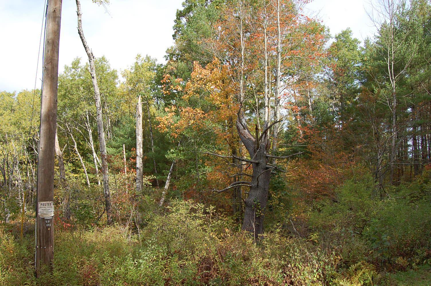 Rare 2 Acres Near Susquehanna River - Image 4