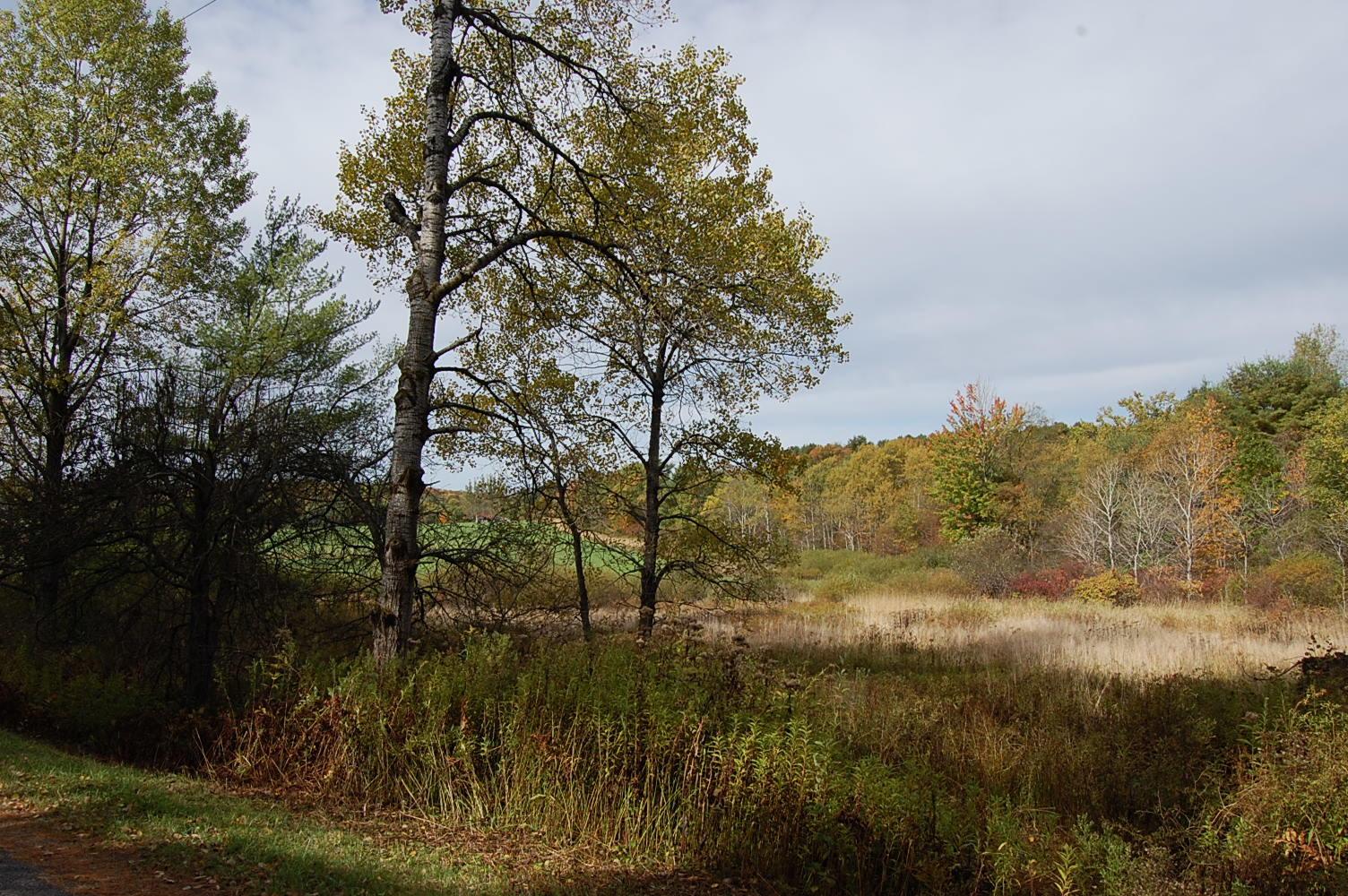 Rare 2 Acres Near Susquehanna River - Image 6