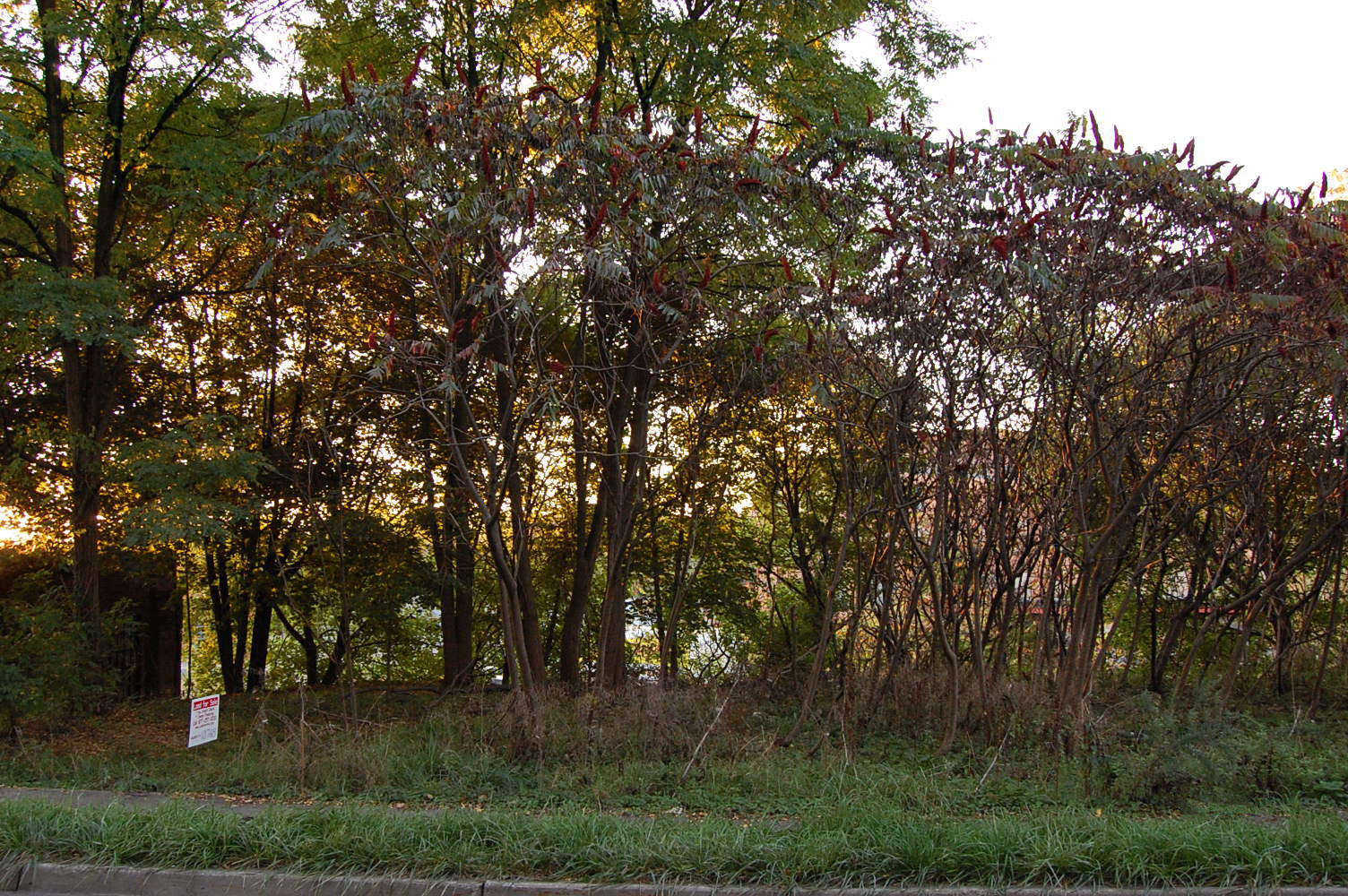 Perfect Land Deal Near Burtis Bay - Image 4