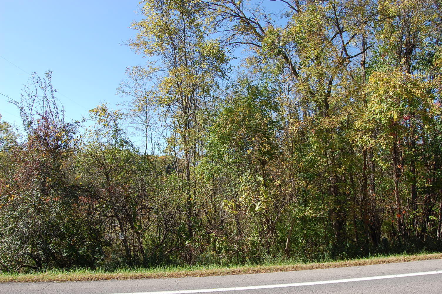 Wooded Two Acre Gem Near Lake Ontario - Image 4
