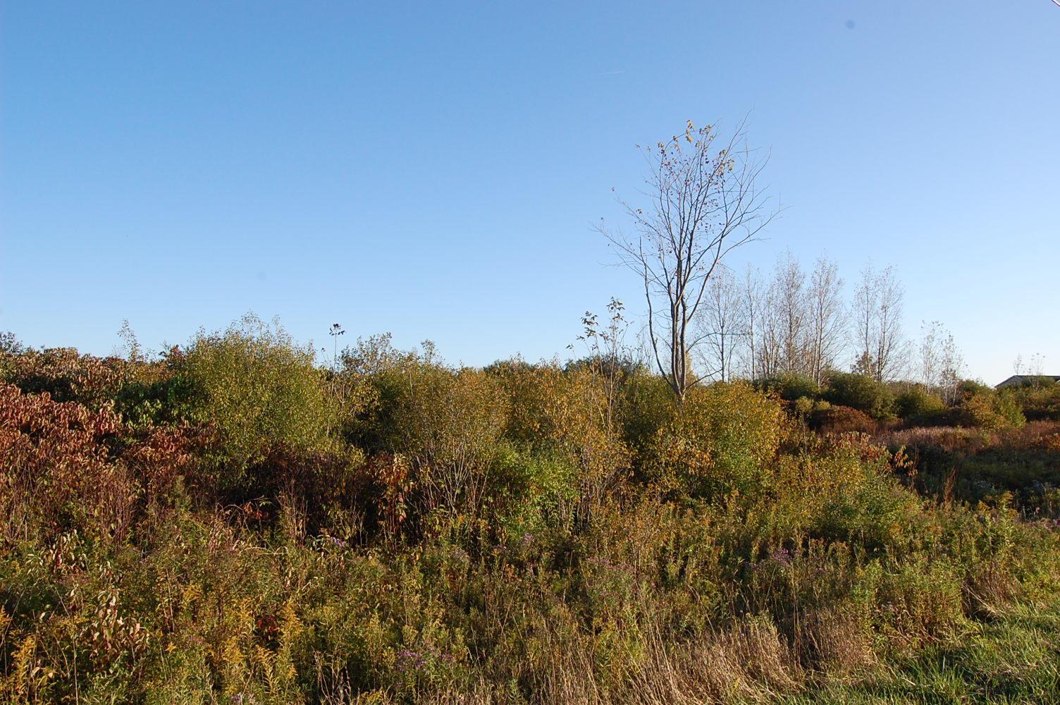 Spacious 10 Acres in New York State Near Lake Ontario - Image 4