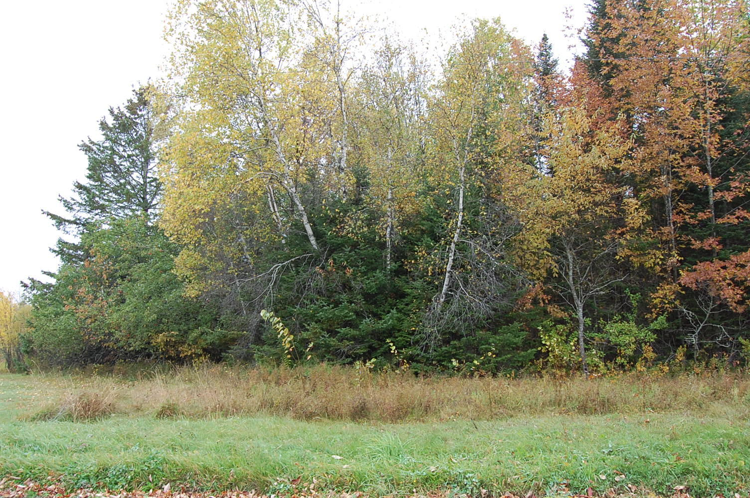 Private Land Near Lowell Lake - Image 4