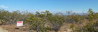 Amazing 5 Acres of Private California Land