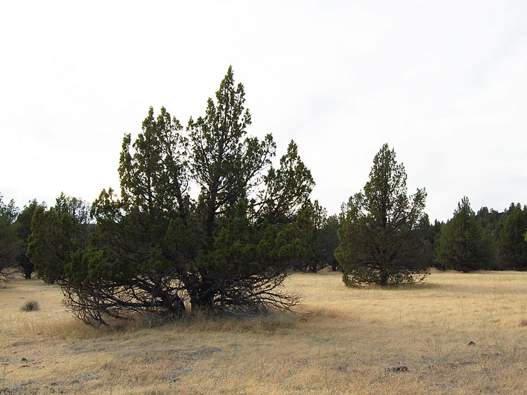 1.47 Acre Property Just North of Alturas - Image 4