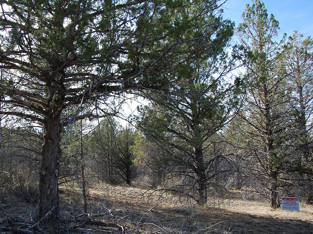One and A Half Acre Modoc Residential Estate Property - Image 4