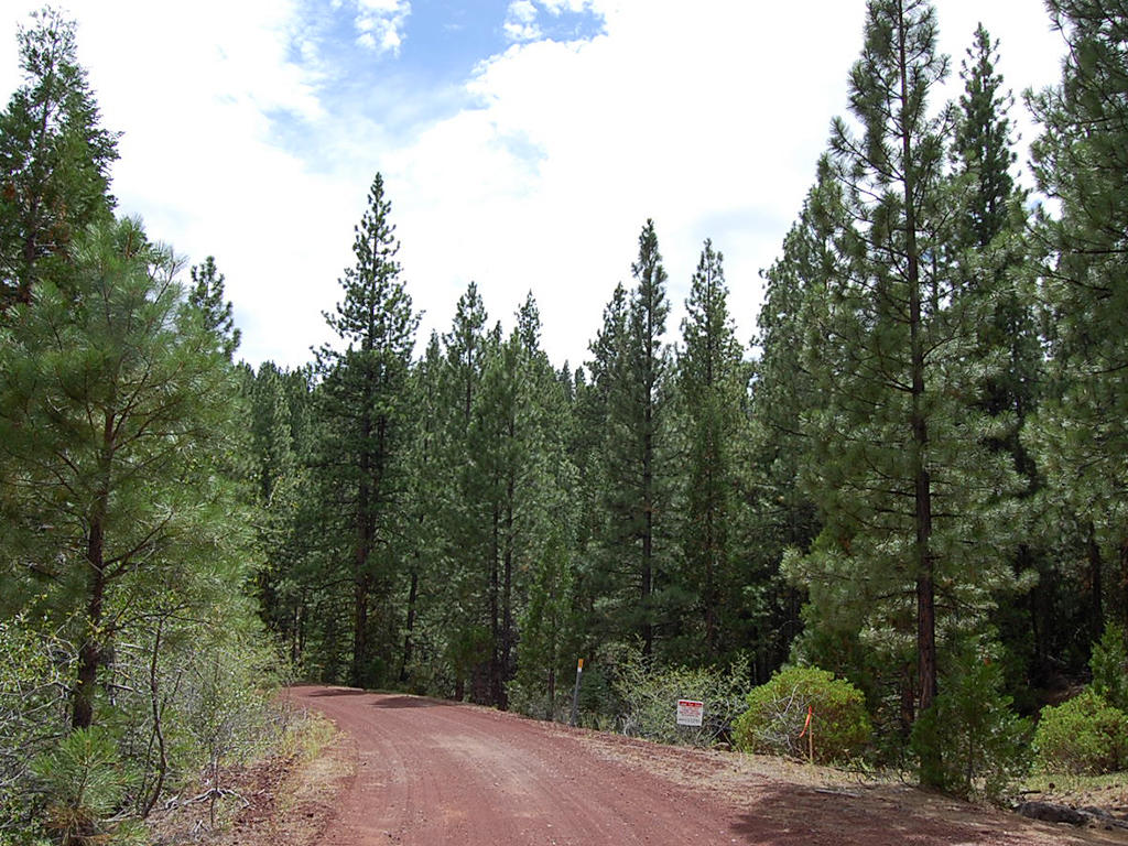 Double Wooded California Pines Lot - Image 4