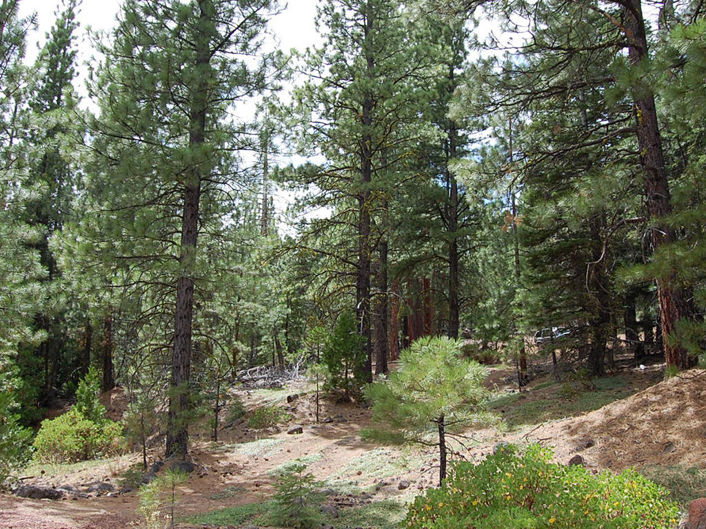 Double Wooded California Pines Lot - Image 1