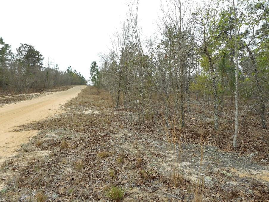 Half an Acre Rural Home Site in Interlachen Florida - Image 1