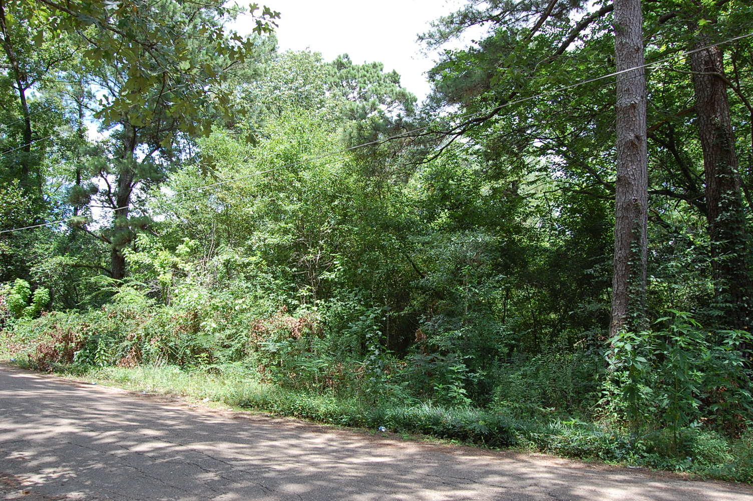 Double lot in Mississippi's Capital - Image 6