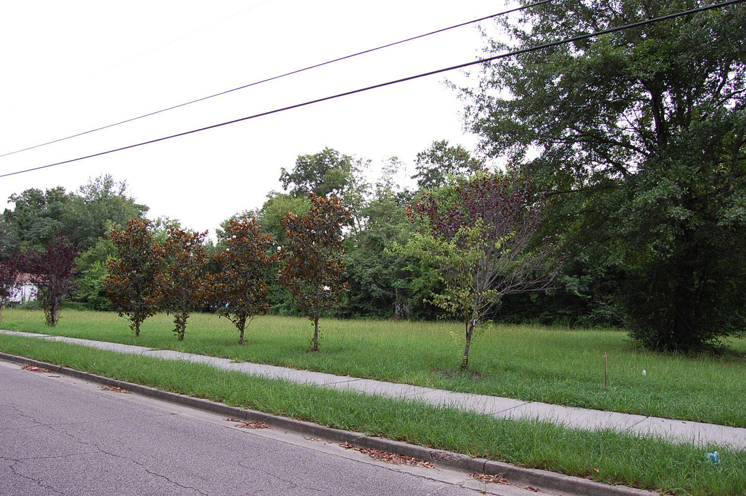 Cleared lot in Historic Hattiesburg - Image 4