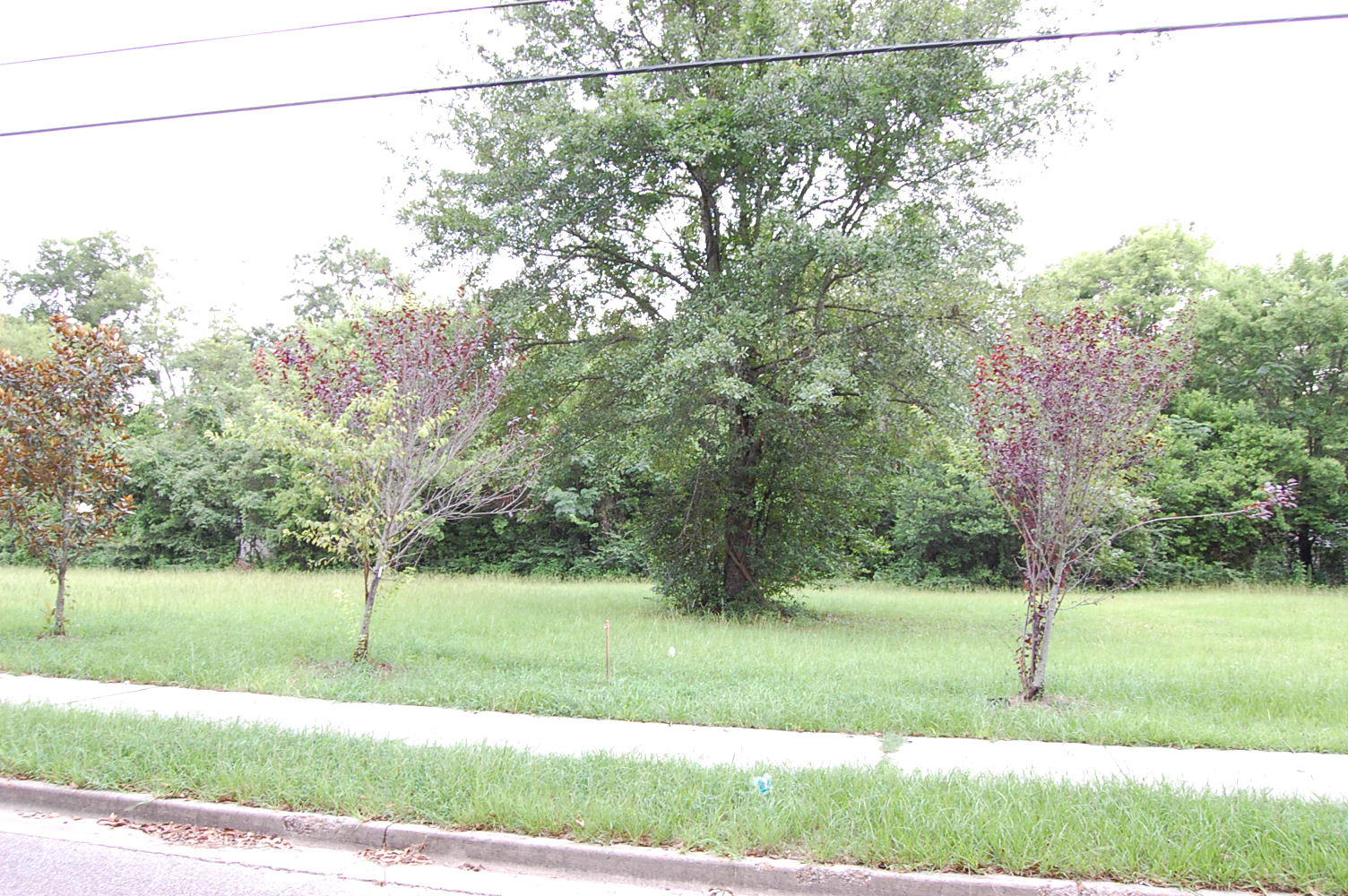 Cleared lot in Historic Hattiesburg - Image 1