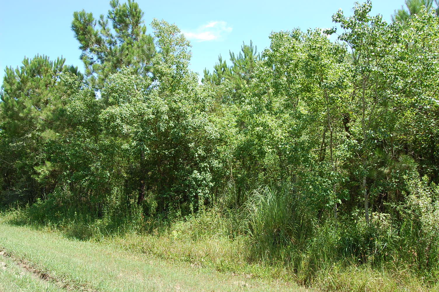Rare Three Lot Parcel in Heart of Gulf Coast - Image 3