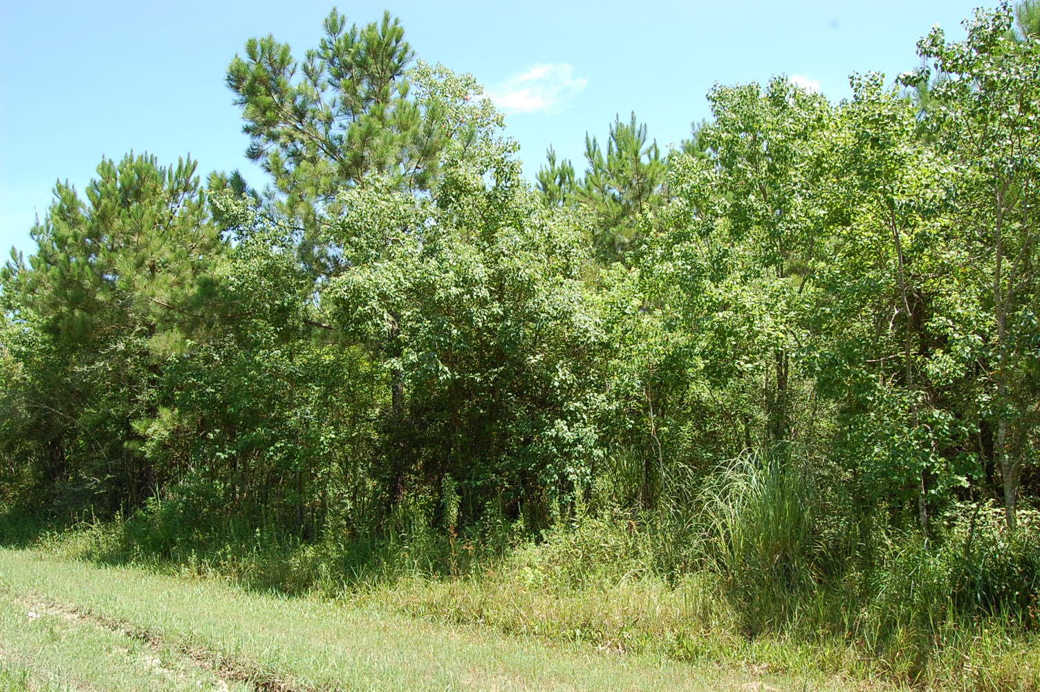 Rare Three Lot Parcel in Heart of Gulf Coast - Image 0