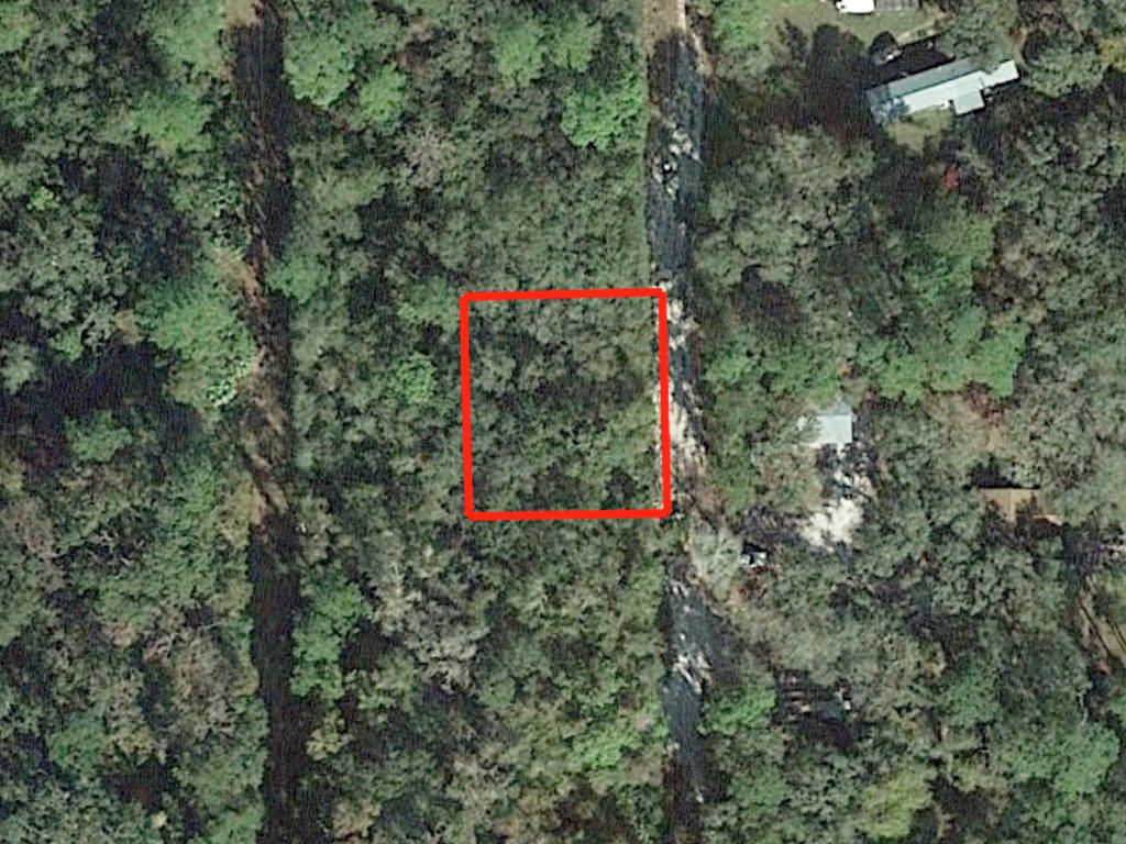 Affordable Florida Lot in Popular Marion County Florida - Image 2