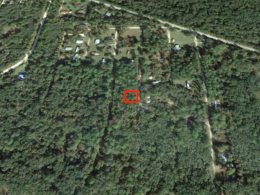 Affordable Florida Lot in Popular Marion County Florida - Image 3