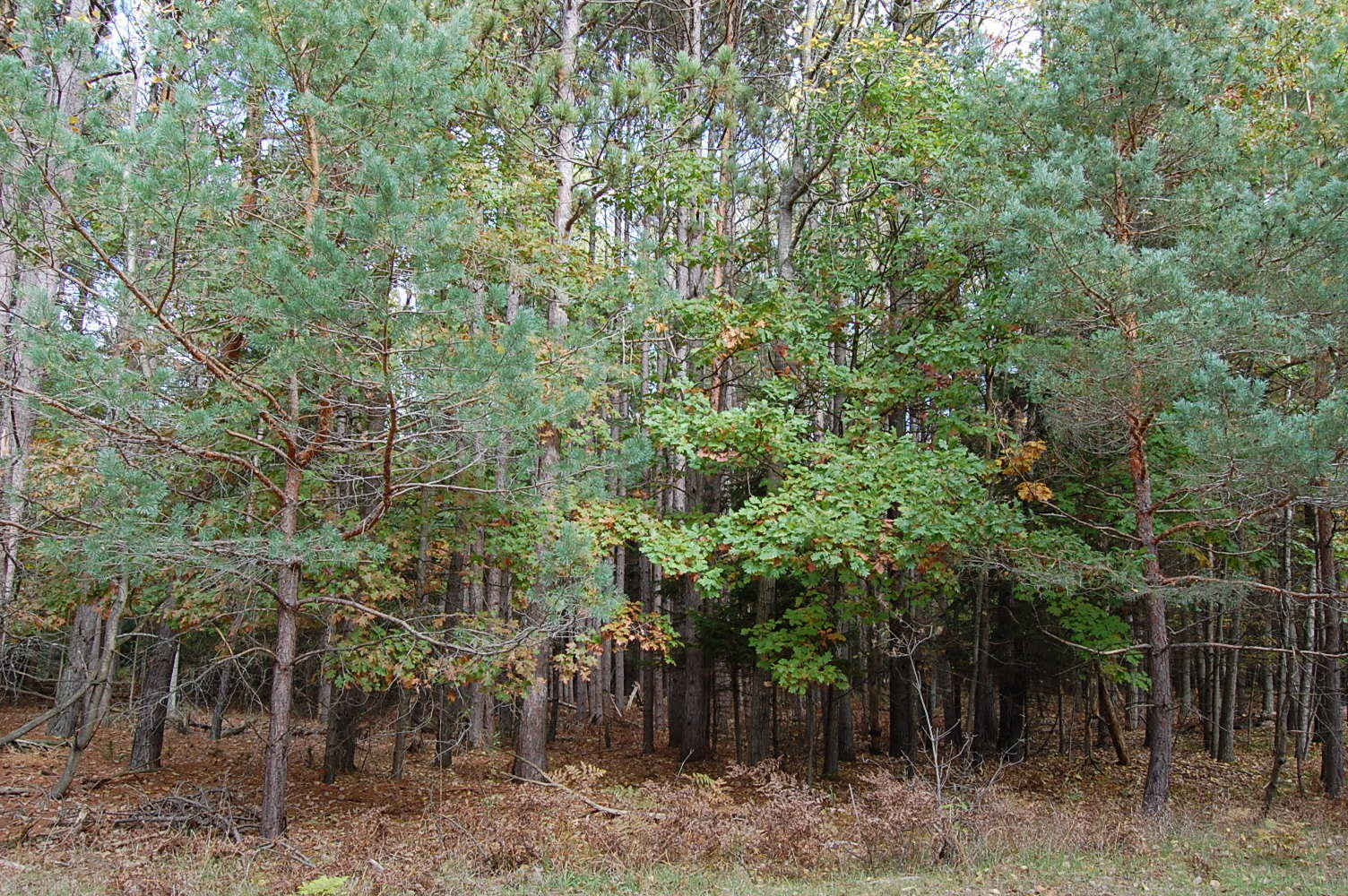 More Than Half Acre Near Lake Laura - Image 4