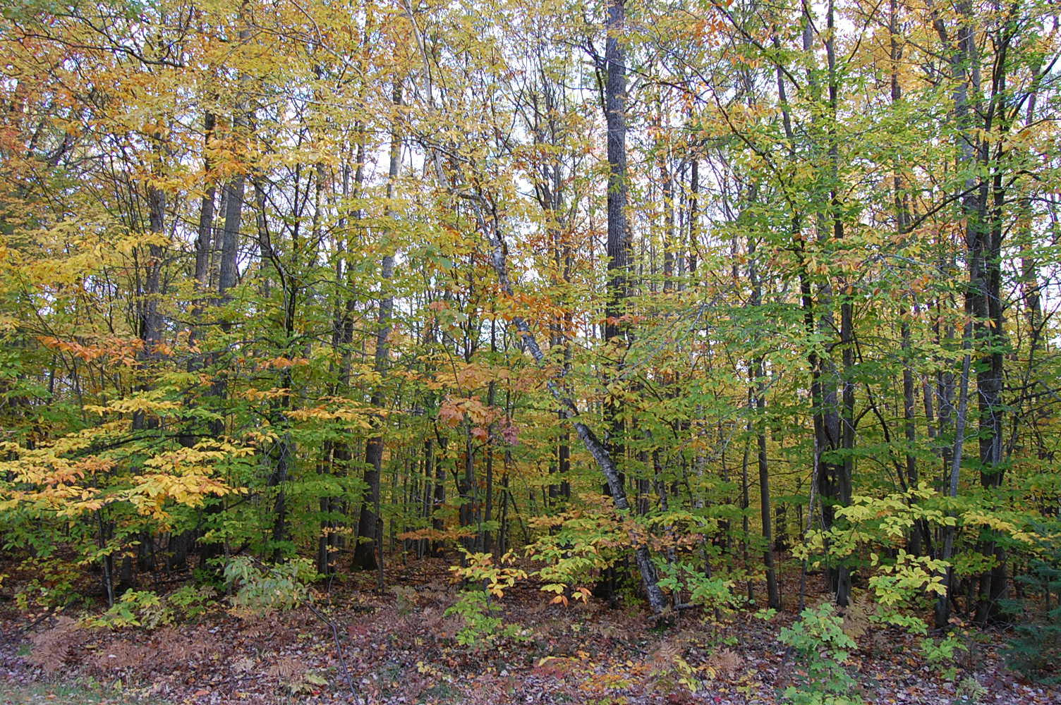 Perfect Property in Scenic Michigan Town - Image 3