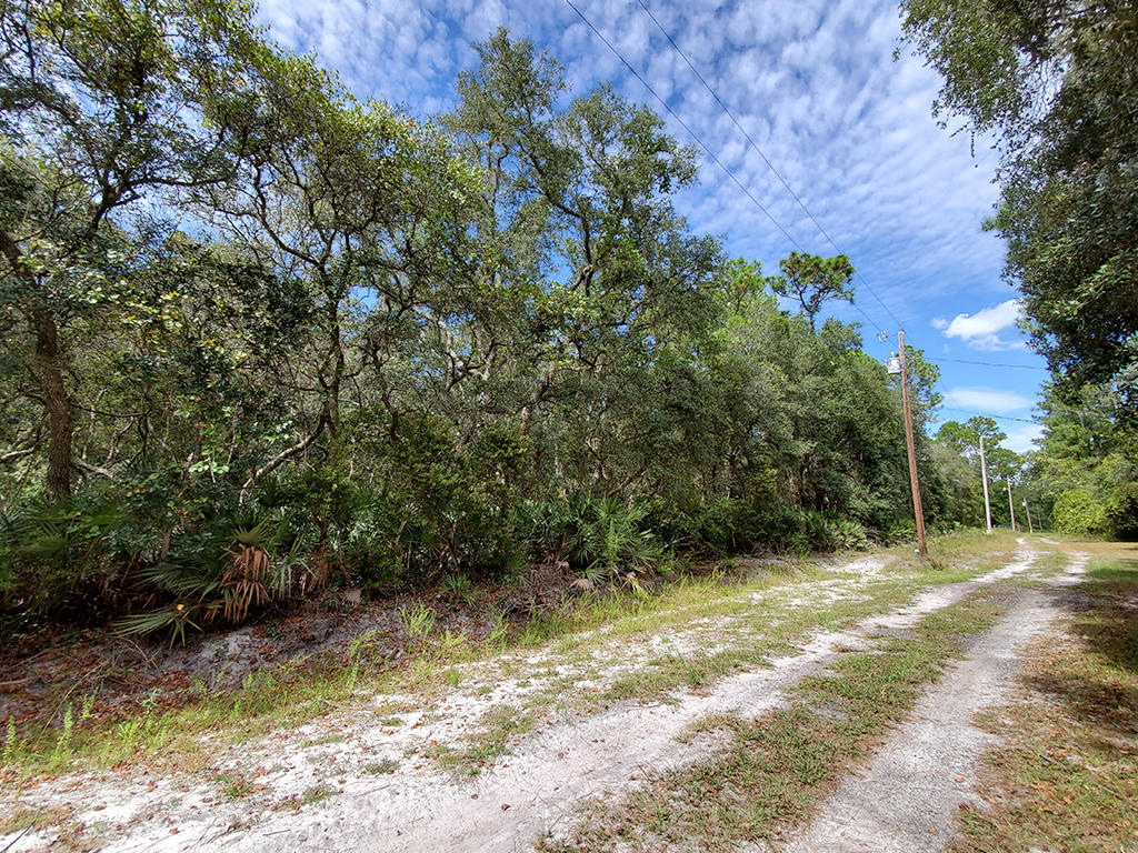 Affordable Florida Lot in Popular Marion County Florida - Image 5