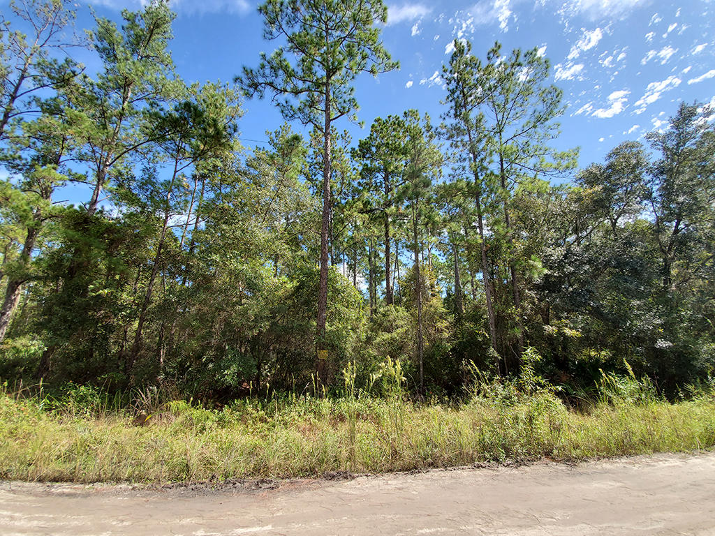 Treed Lot in Anthony - Image 5