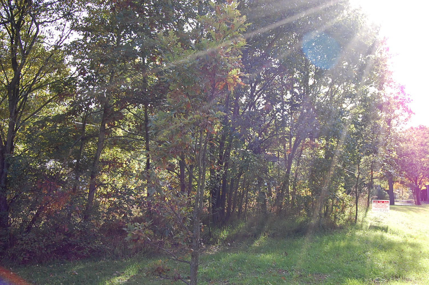 Great Michigan Residential Lot in Holton - Image 5