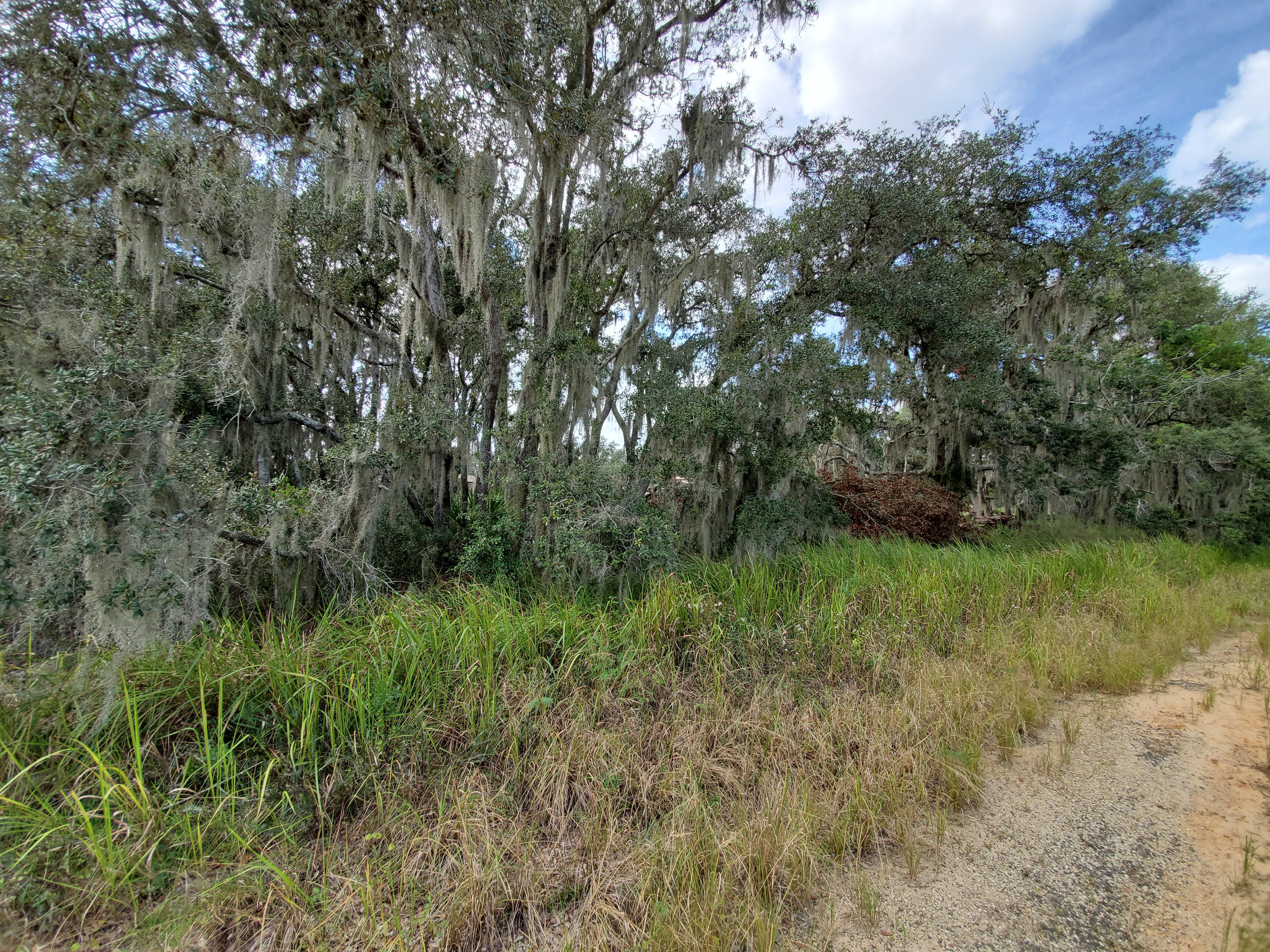 Residential Lot Close to Lake Olivia - Image 4