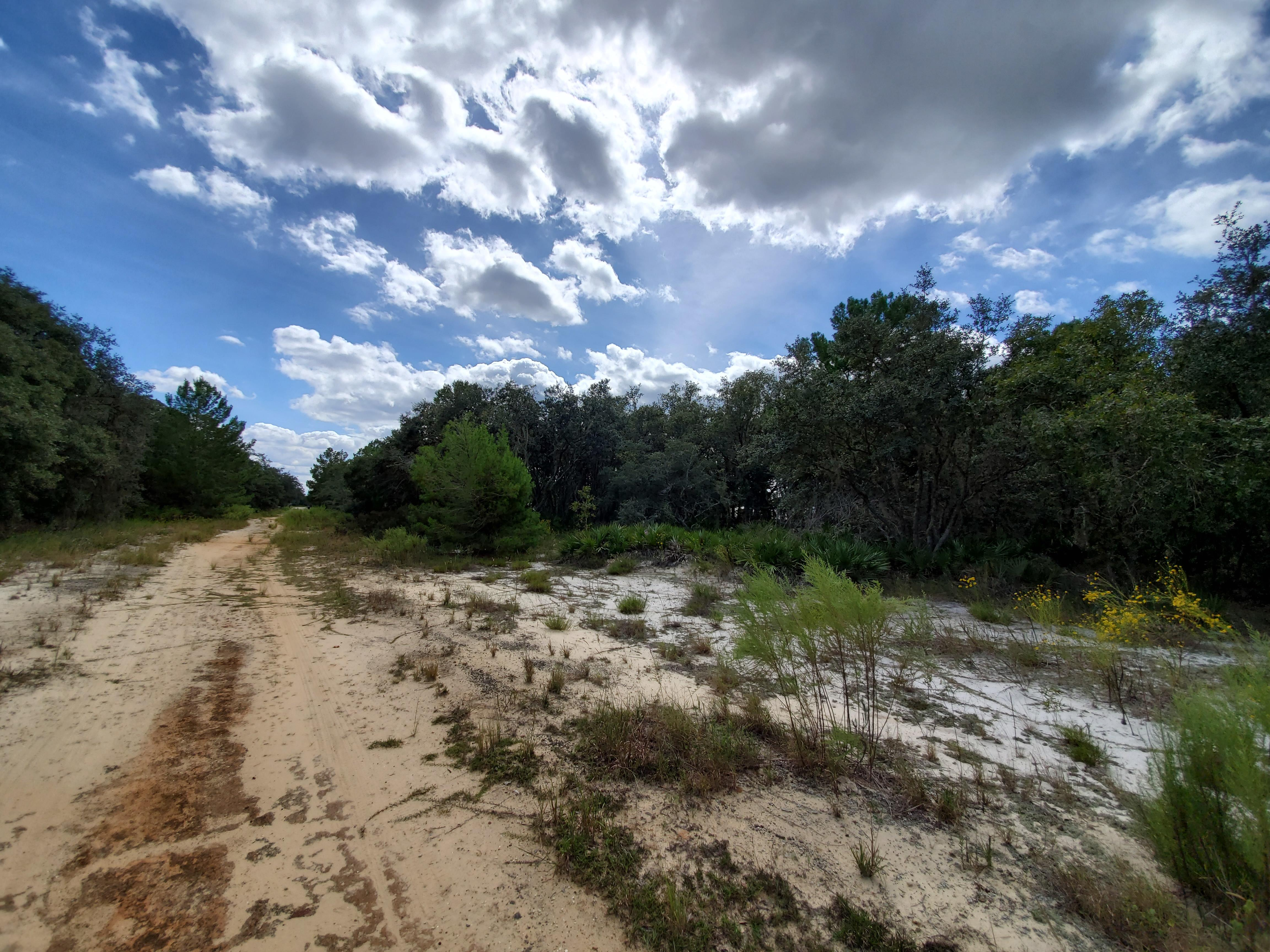 Residential Lot Close to Lake Olivia - Image 5
