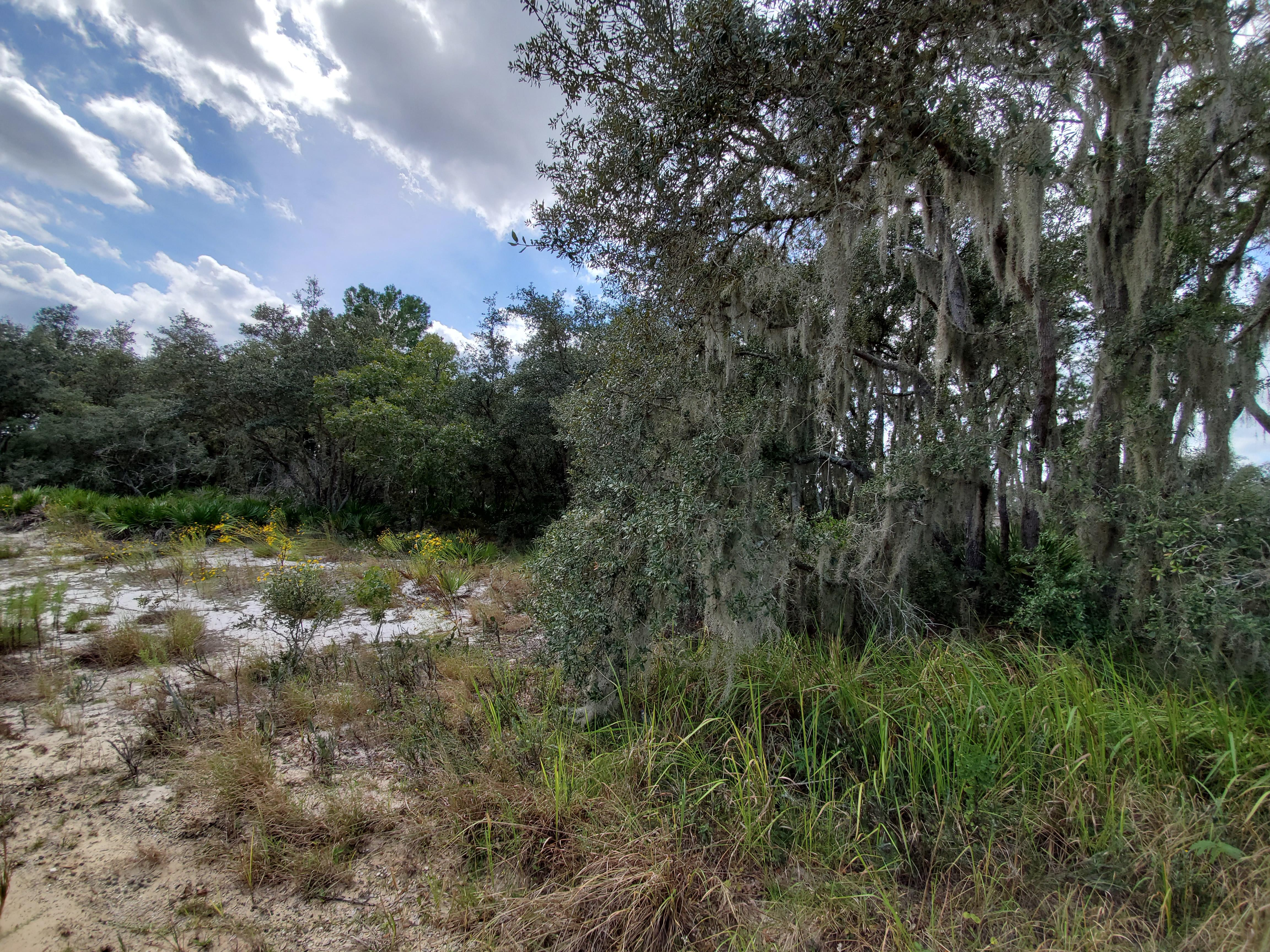 Residential Lot Close to Lake Olivia - Image 1