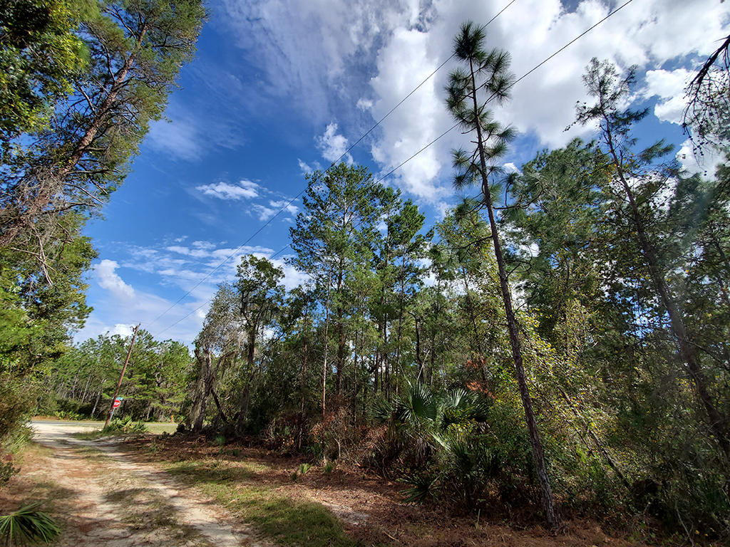 Nearly Quarter Acre Central Florida Homesite - Image 5