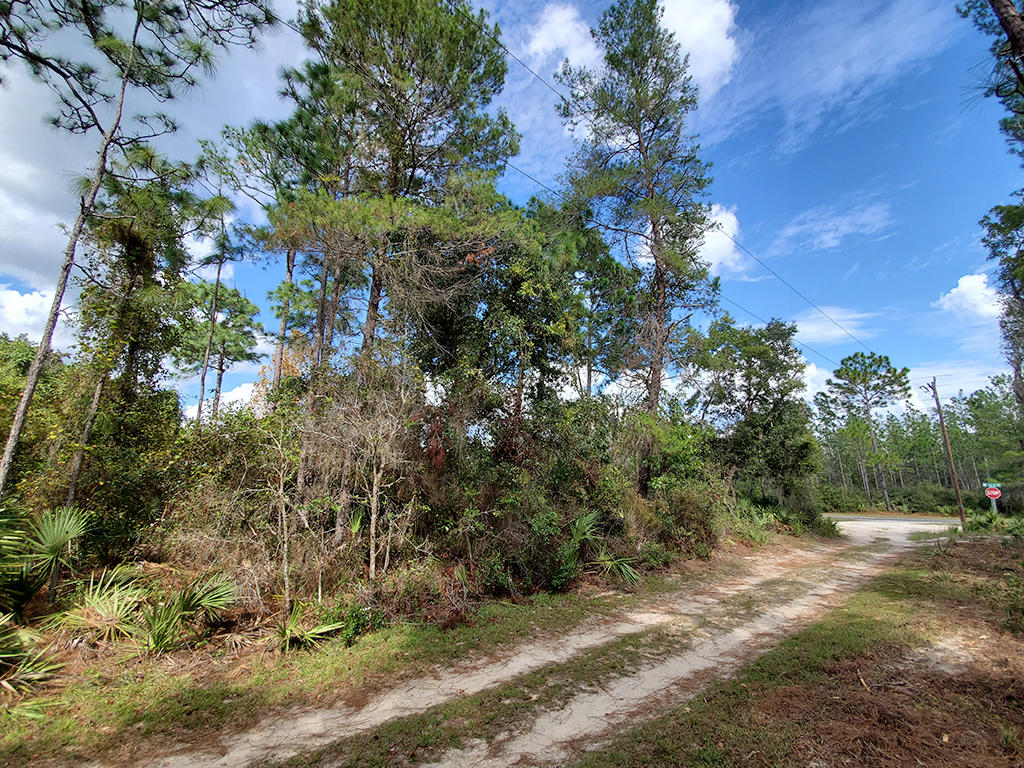 Nearly Quarter Acre Central Florida Homesite - Image 1