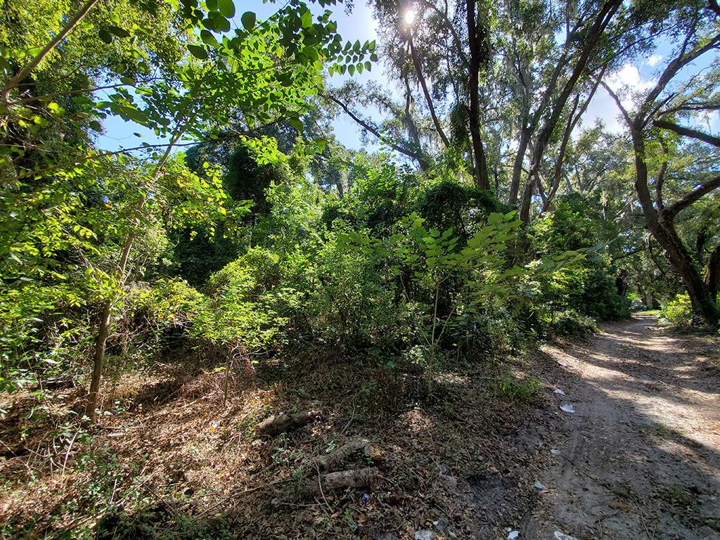 Reddick Florida Residential Acreage - Image 4