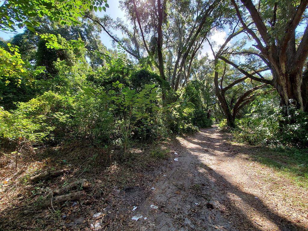 Reddick Florida Residential Acreage - Image 5