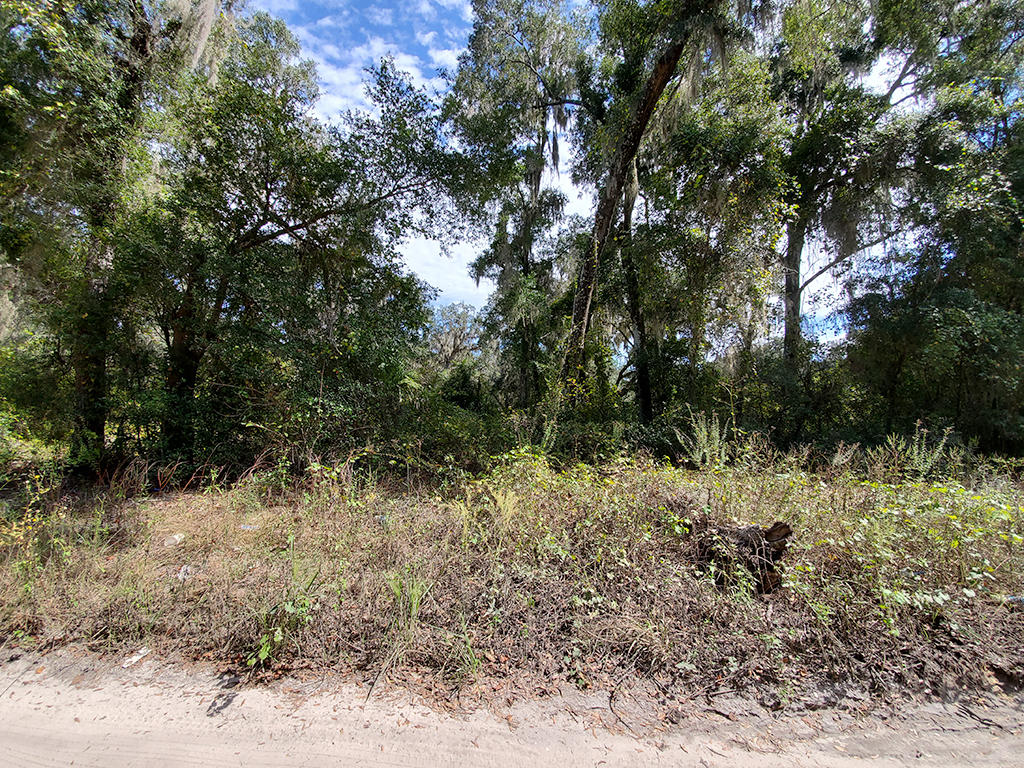 Charming Lot in Citra Florida - Image 3