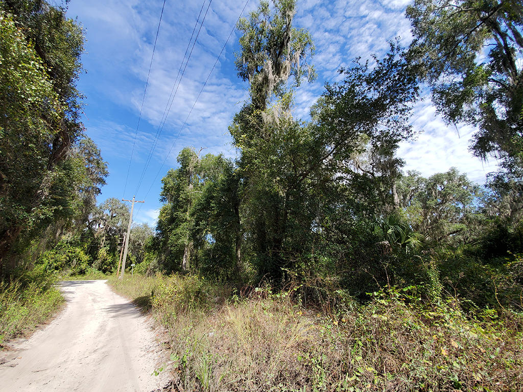 Charming Lot in Citra Florida - Image 4