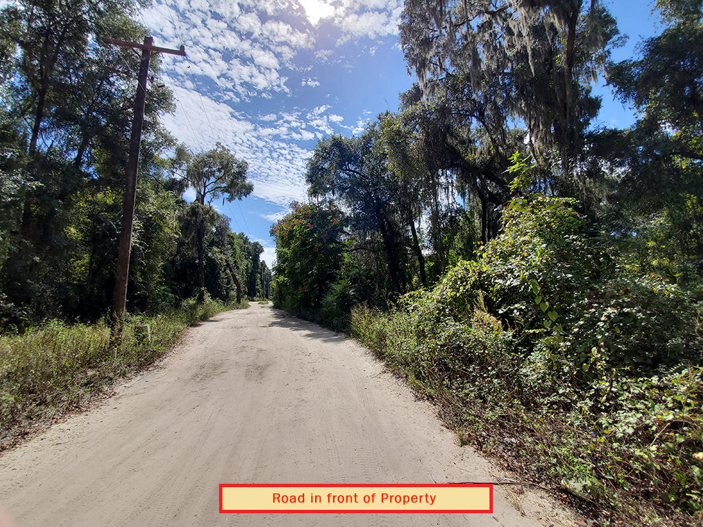 Charming Lot in Citra Florida - Image 5