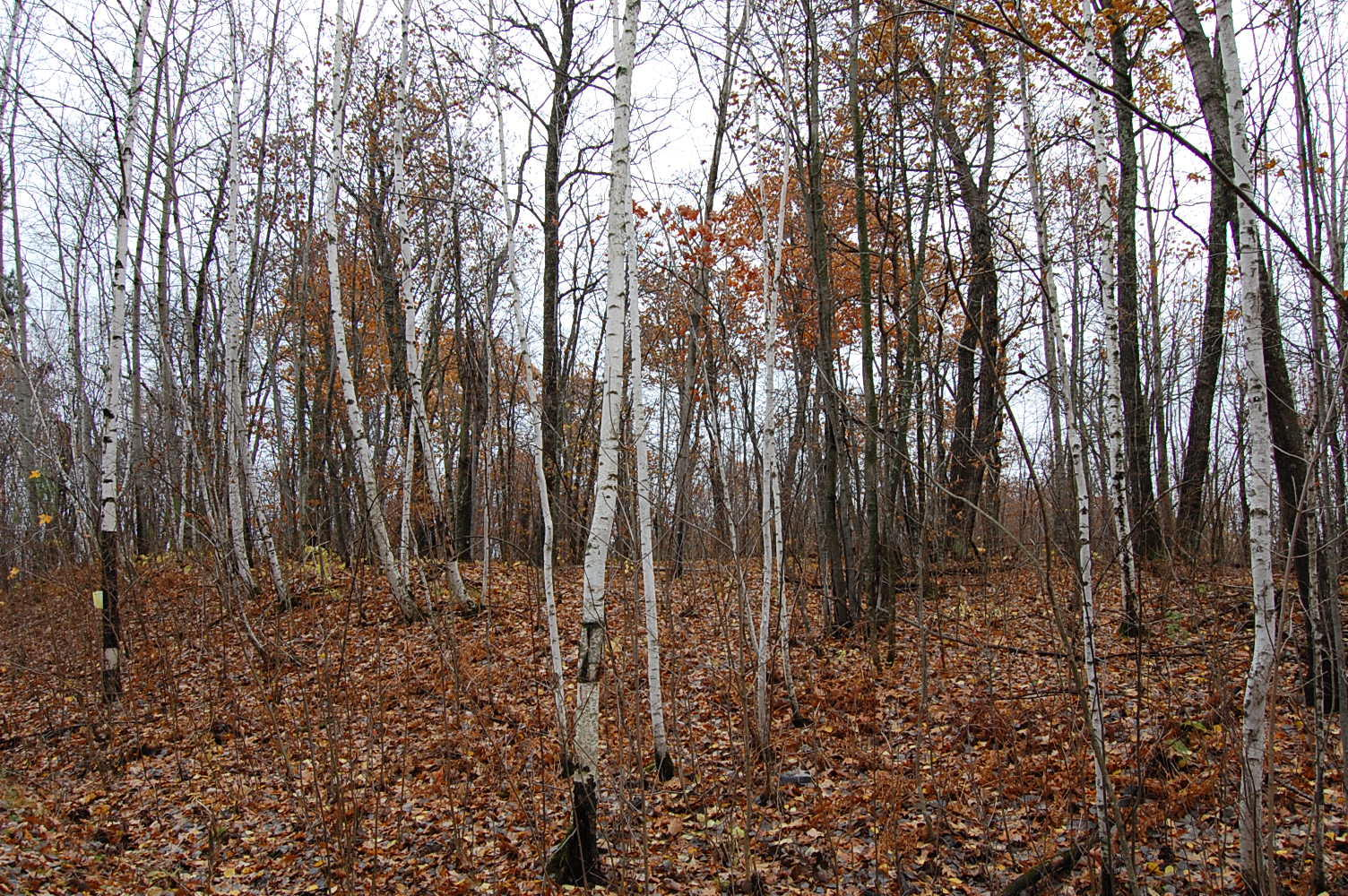 Perfect Investment Property Near Mille Lacs Lake - Image 3