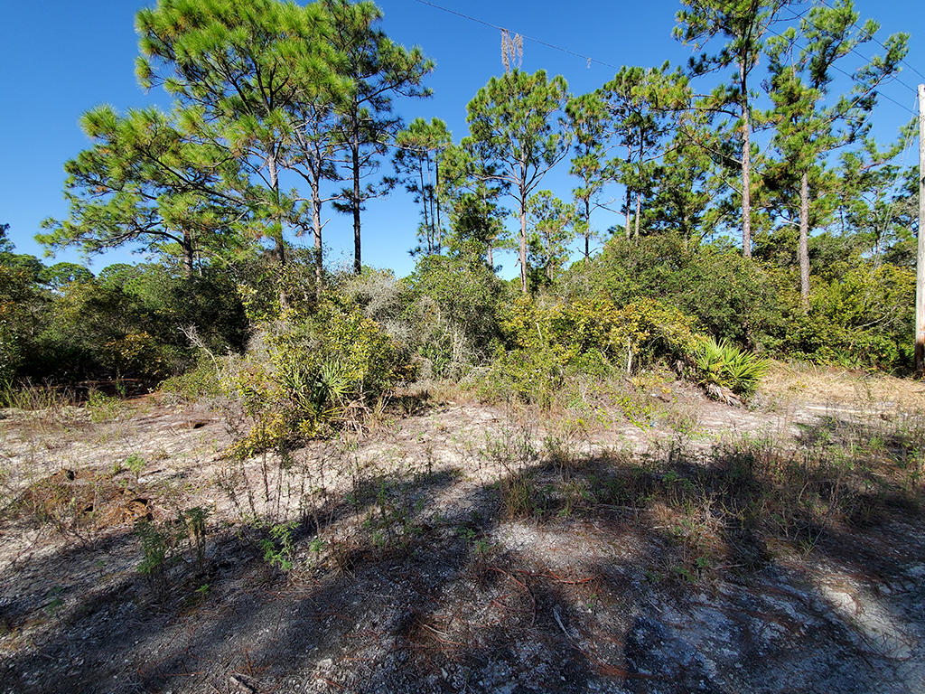Just Under Half Acre Near Beautiful Florida Lake - Image 4