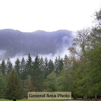 Tree-Covered Washington Paradise Near Cascade River - Image 3