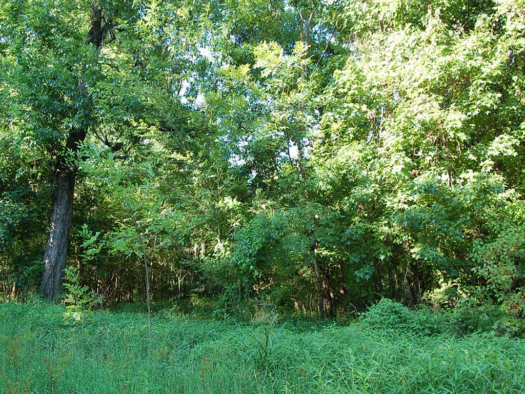 Nearly Half Acre Timber Lake Texas Parcel - Image 0