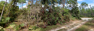 Nearly Quarter Acre Central Florida Homesite