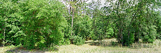 Over 1 Acre With Legal Access