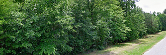 Gorgeous 1 Acre Lot with a Gentle Creek