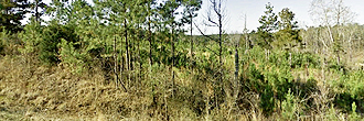 Almost Two Acres Near Grenada Lake