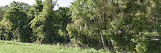 Large Lot Near Lake Placid in Central Florida